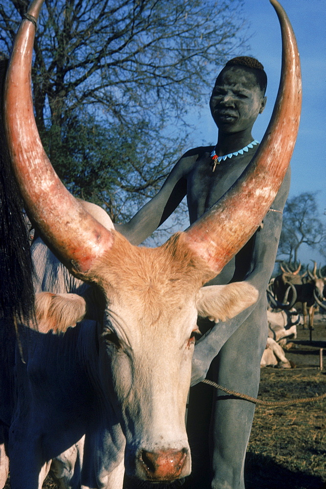 Dinka young man with one of his cattle. Southern Sudan.