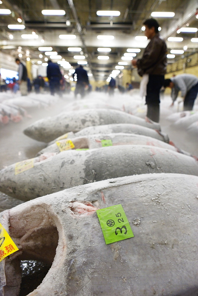 Tsukiji Fish Market, rows of fresh frozen tuna, Tokyo, Japan, Japan