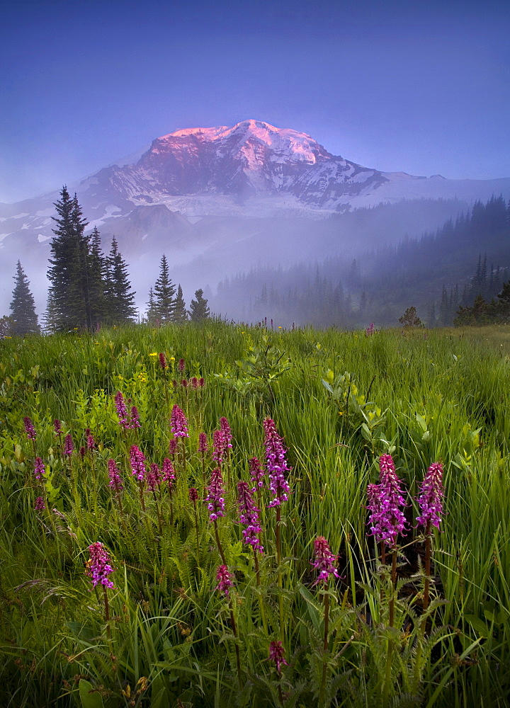 Mount Rainier towers over this foggy meadow of wildflowers in Washington's wilderness.