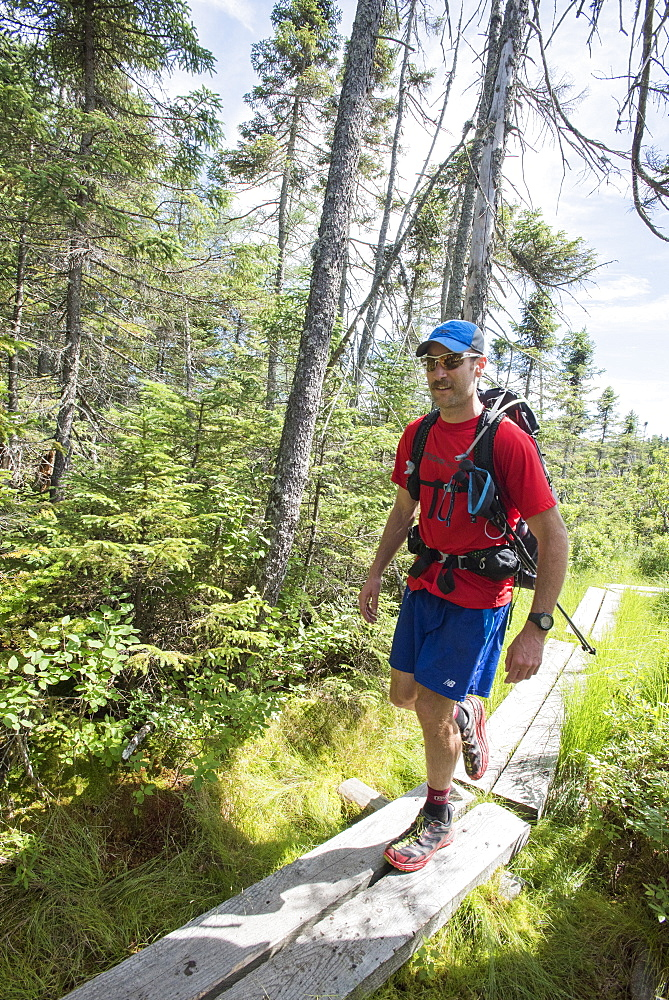 Male Hiker Walking On Boardwalk Surrounded By Grassyland In Forest