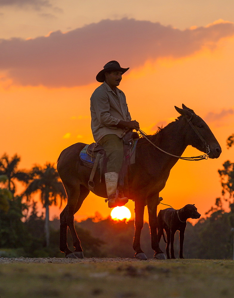 Campesino sitting on horse with dog at sunset