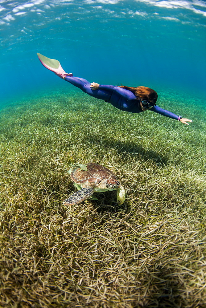 Woman freediving with turtle underwater, West End, West Bay, Roatan, Honduras
