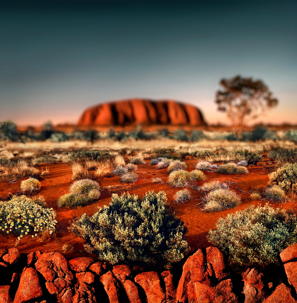 Landscape with Ayers Rock (Uluru) at sunset, Uluru, Northern Territory, Australia