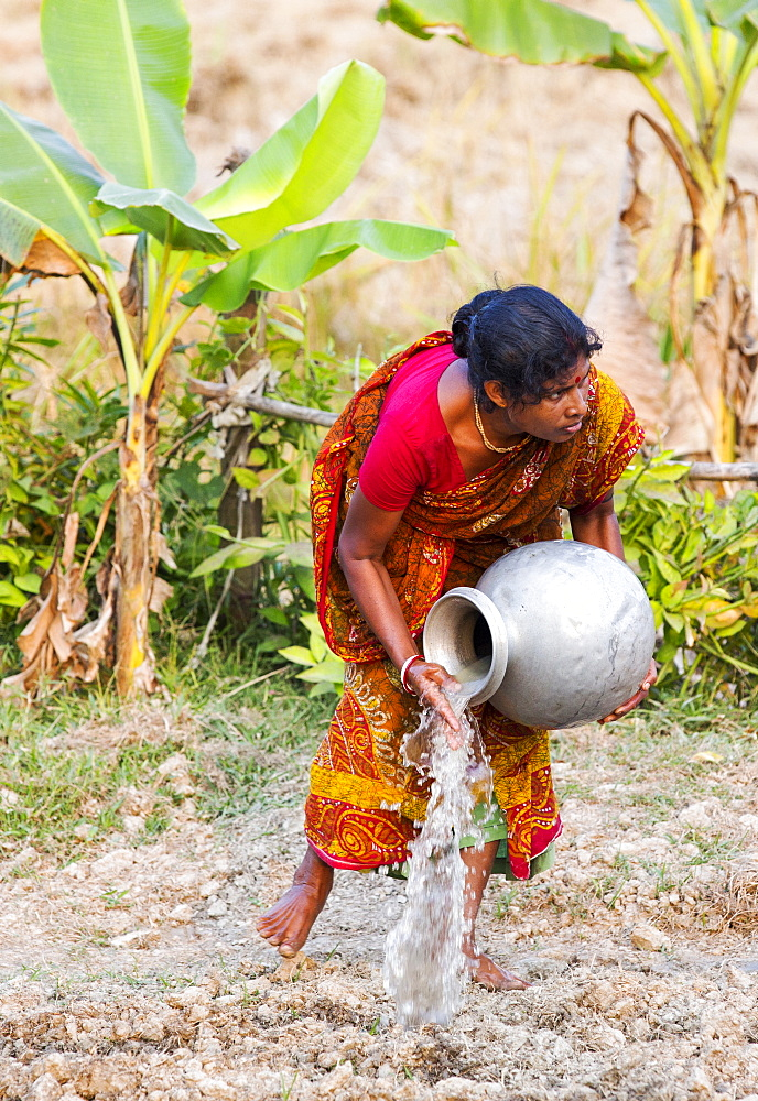 A Subsistence farmer watering her vegetable garden by hand, in the Sunderbans, Ganges, Delta, India, the area is very low lying and vulnerable to sea level rise.