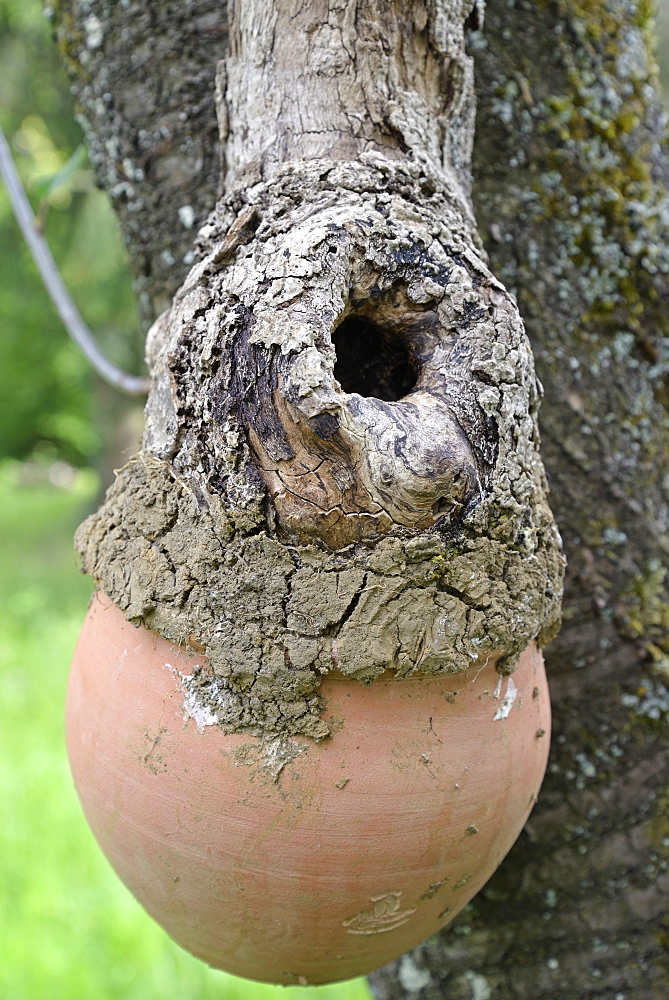 Birdhouse made with a pot and an hollow branch