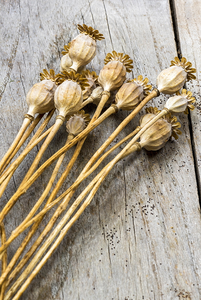 Dried fruits of poppy flowers - 860-286986