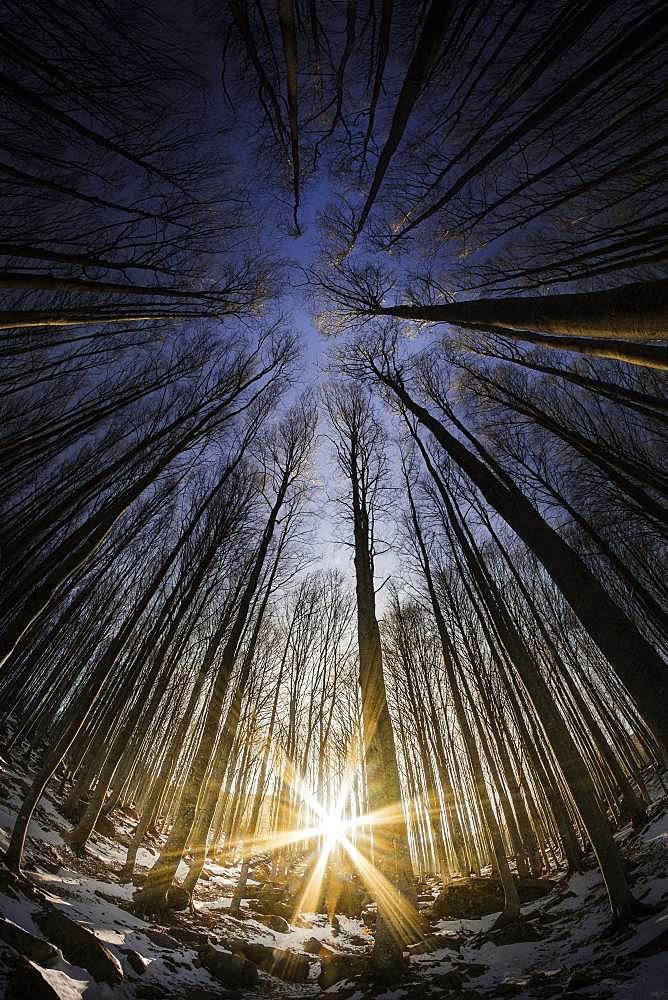 Beech forest near Lago Santo, Bardi, Parma, Emilia-Romagna, Italy