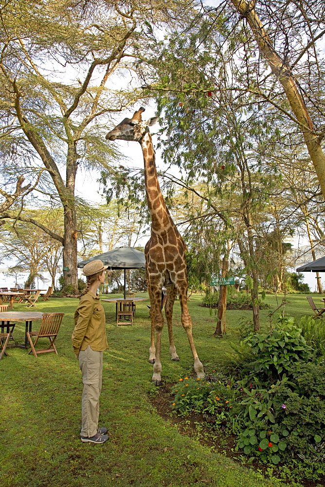 Eric a person-friendly giraffe with Swiss lady guest wearing straw hat at Elsamere Naivahsa Kenya
