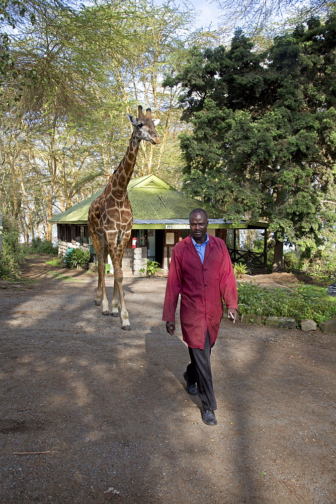 Eric a person-friendly giraffe at Elsamere Naivahsa Kenya