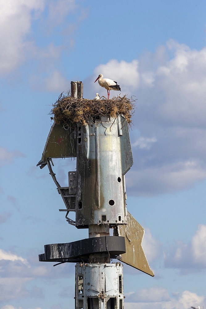 White Stork (Ciconia ciconia) nest on top of scavenged plane part, Spain