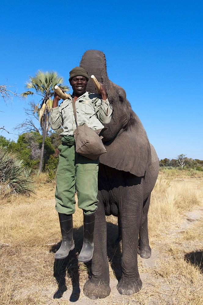 Elephant back safari, Abu Camp, Okavango Delta, Botswana