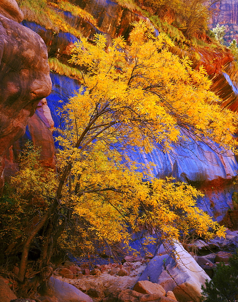 fall colour and cliff face along Pine Creek USA