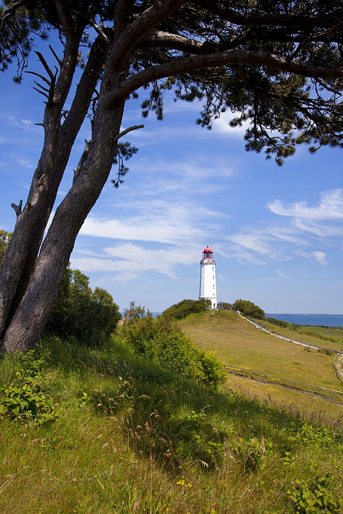 landscape with tree coast lighthouse Hiddensee Mecklenburg-Western Pomerania - 869-5673