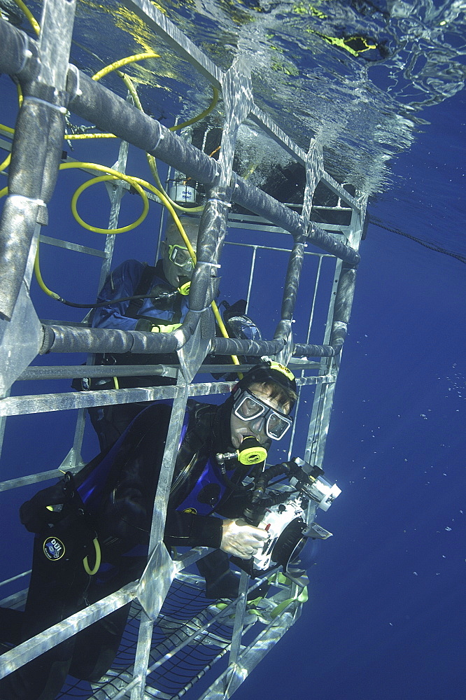 Diver in Shark diving cage,  Isla Guadalupe, Mexico, Central America   (RR)