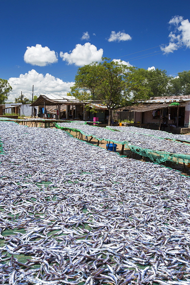Fish caught in Lake Malawi, on drying racks at Cape Maclear, Malawi, Africa. - 911-10911