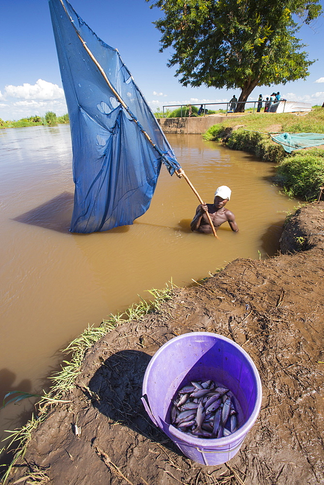 A fisherman catching small fish in the Shire river in Nsanje, Malawi. - 911-10942