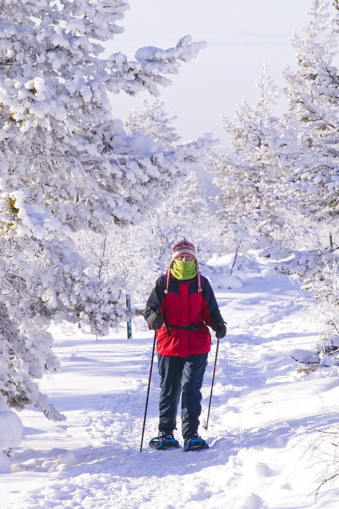 A woman snow shoeing in the Urho Kehkkosen National Park near Saariselka, Northern Finland, Finland, Scandinavia, Europe