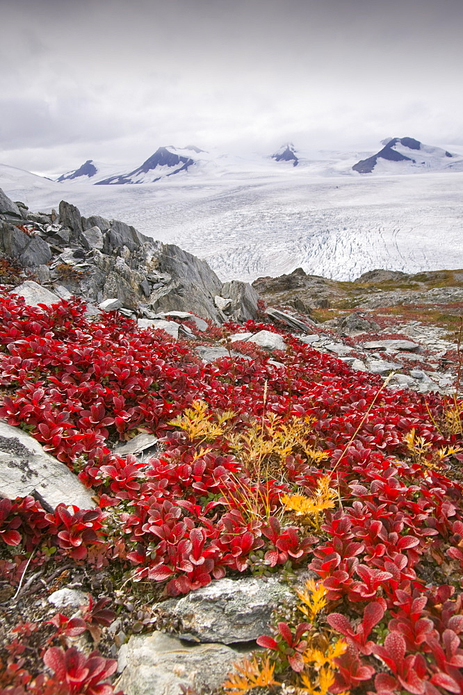 The Harding icefield, receding rapidly due to global warming, Kenai Fjords National Park in Alaska, United States of America, North America