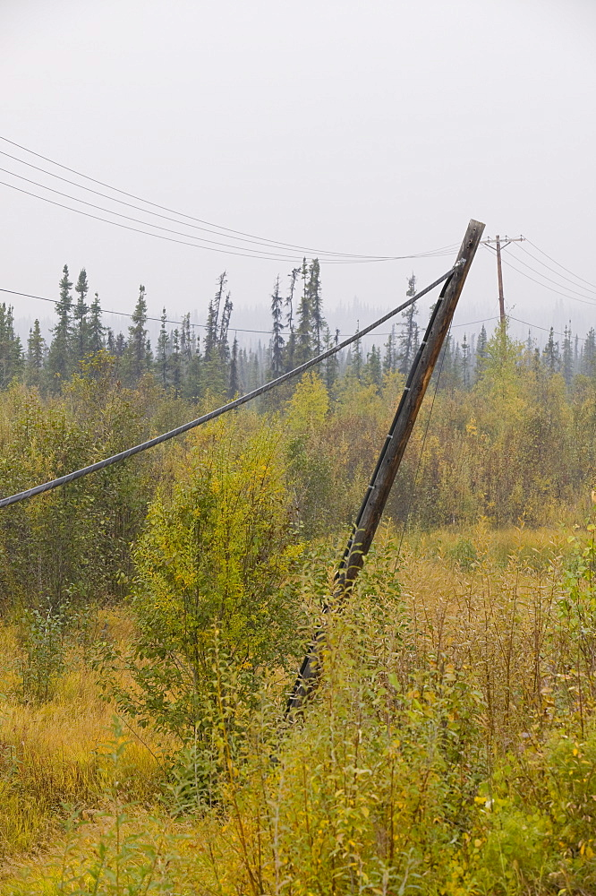 Electricity poles collapsing due to global warming-induced permafrost melt, in Fairbanks, Alaska, United States of America, North America