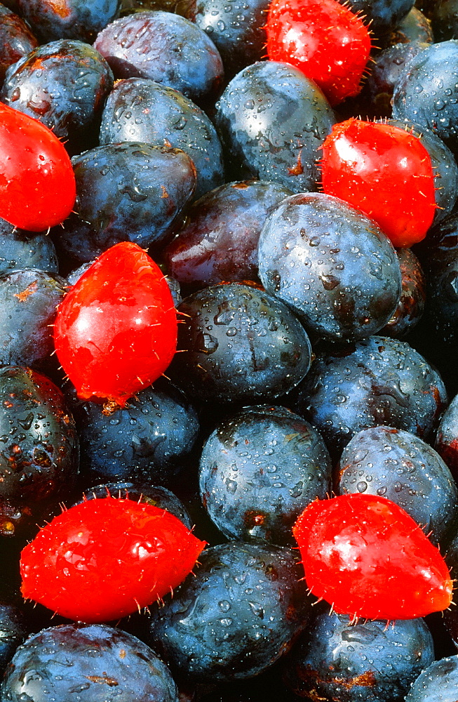 Damsons and rose hips