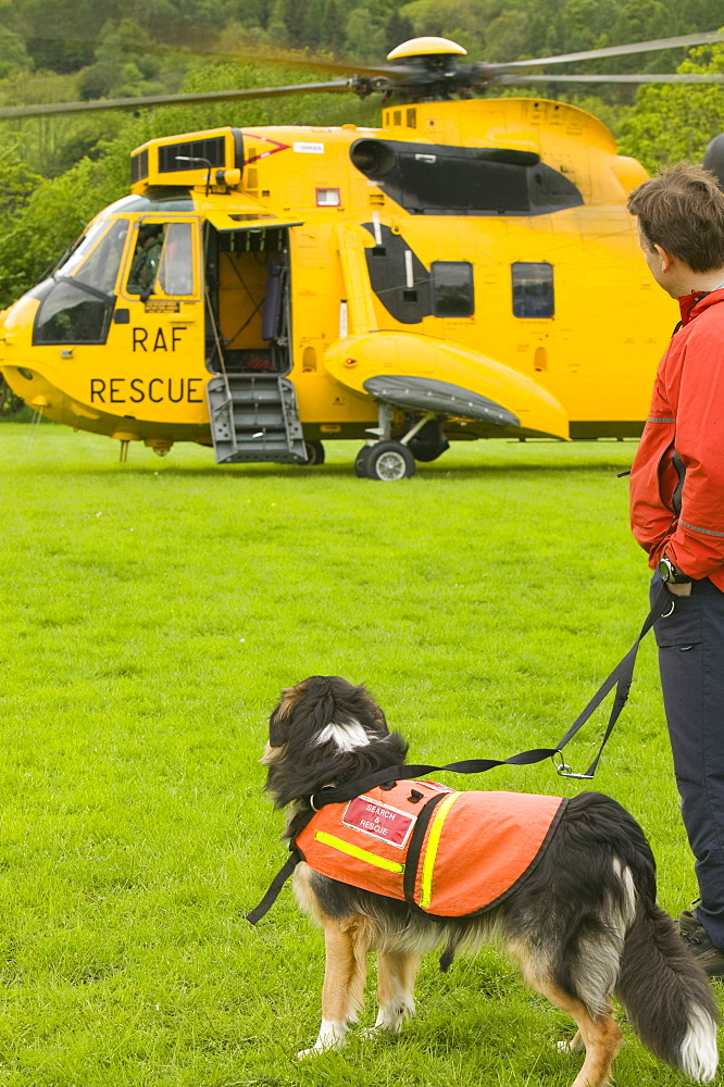 An RAF Sea King Helicopter and search dog and handler, Lake District, Cumbria, England, United Kingdom, Europe