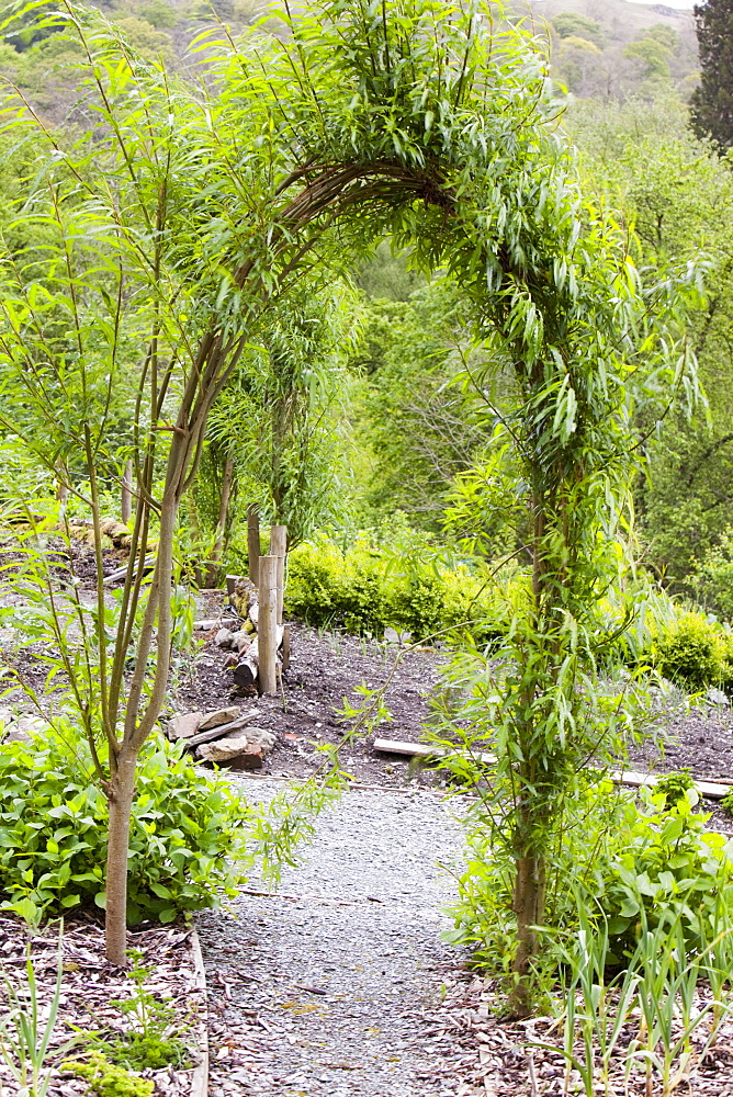 A willow arch in Rydal Community Vegetable Garden near Ambleside, Lake District, Cumbria, England, United Kingdom, Europe