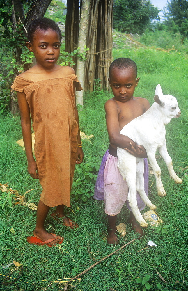 Children and goat in a village on the outskirts of Mombasa, Kenya, East Africa, Africa