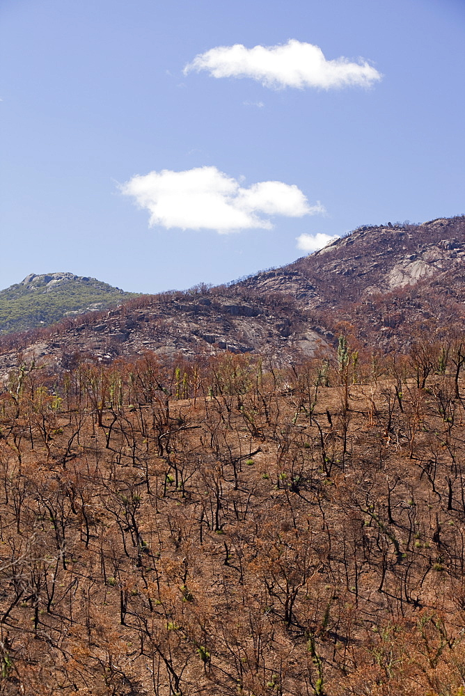 Forest destroyed by bush fires near Michelago in December 2009, New South Wales, Australia, Pacific