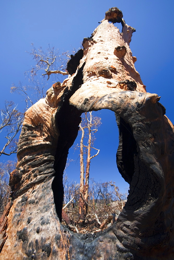 Forest destroyed by bush fires in December 2009 near Michelago, New South Wales, Australia, Pacific