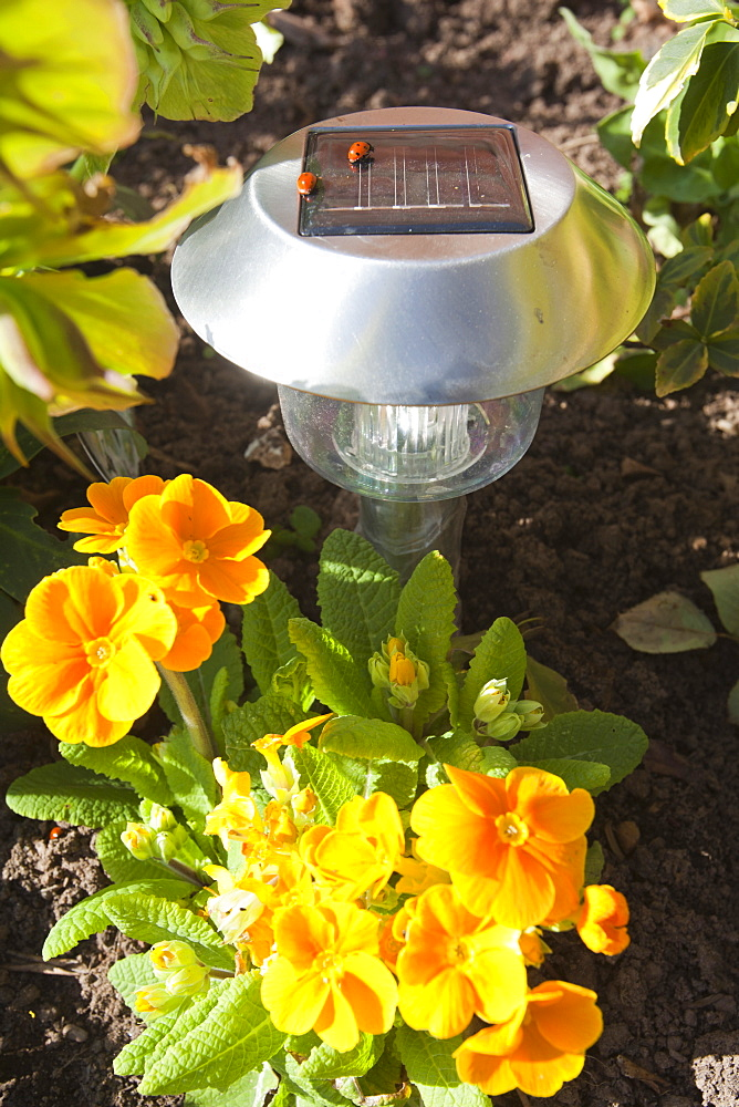 Solar lights in a garden in Quorn, Leicestershire, England, United Kingdom, Europe