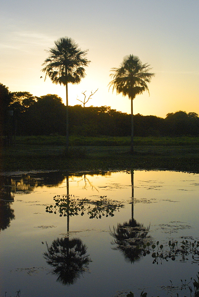 Sunset at southern Pantanal, Mato Grosso do Sul, Brazil, South America