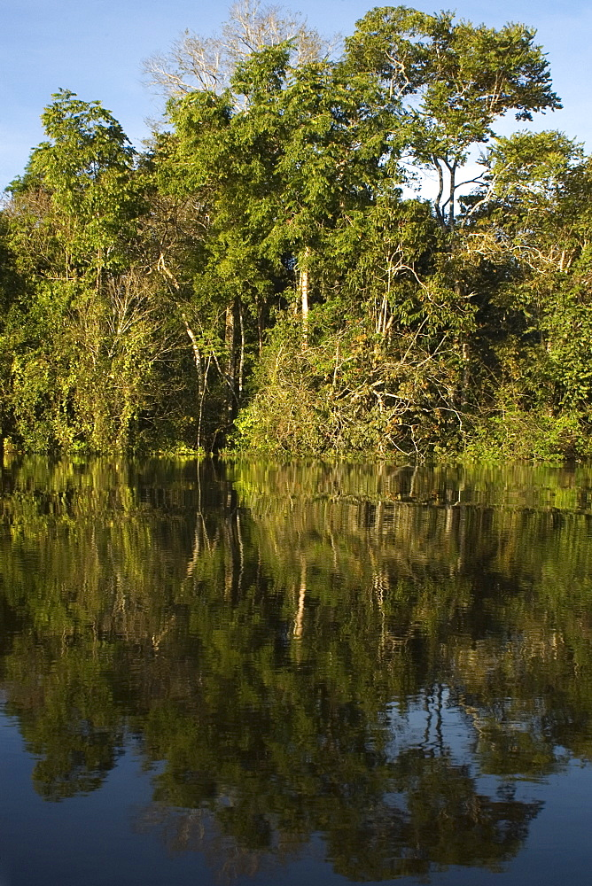 Flooded tropical rain forest, Mamiraua sustainable development reserve, Amazonas, Brazil, South America - 920-2045