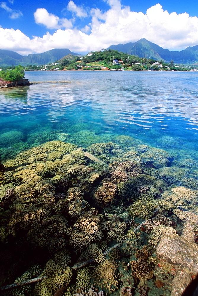 Hard coral and Koolau mountains, Hawaii Institute of Marine Biology, Coconut Island, Oahu, Hawaii, United States of America, Pacific