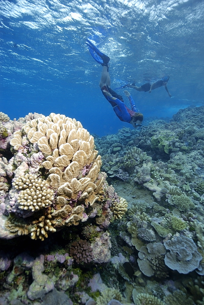 Free divers explore the pristine reef, Jaboan, Rongelap, Marshall Islands, Micronesia, Pacific
