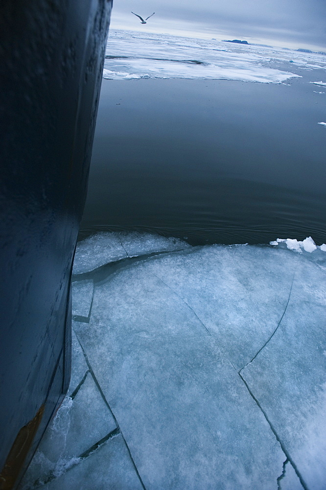 Front of boat cutting through ice sheets. Longyearbyen, Svalbard, Norway