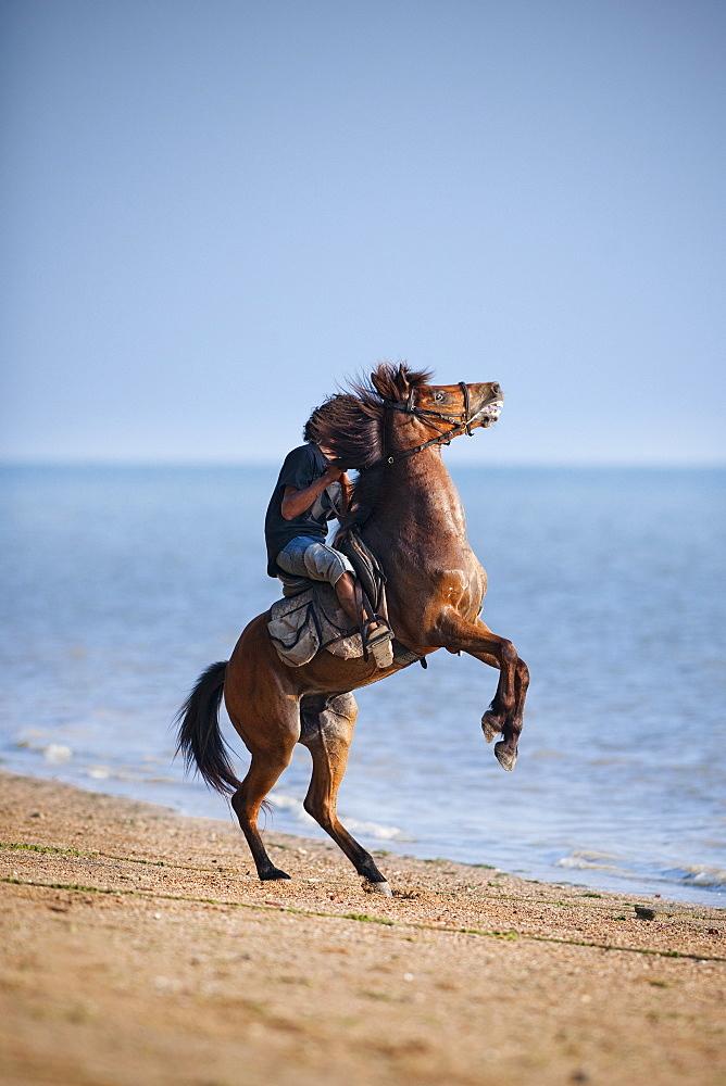 Horse riding along beach, horse rearing, Ao Nam Mao.  Ao Nang, Krabi, Thailand, Asia
