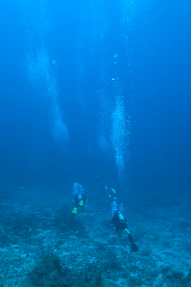 Scuba divers underwater, Thailand, Andaman Sea, Indian Ocean, Asia - 921-1295
