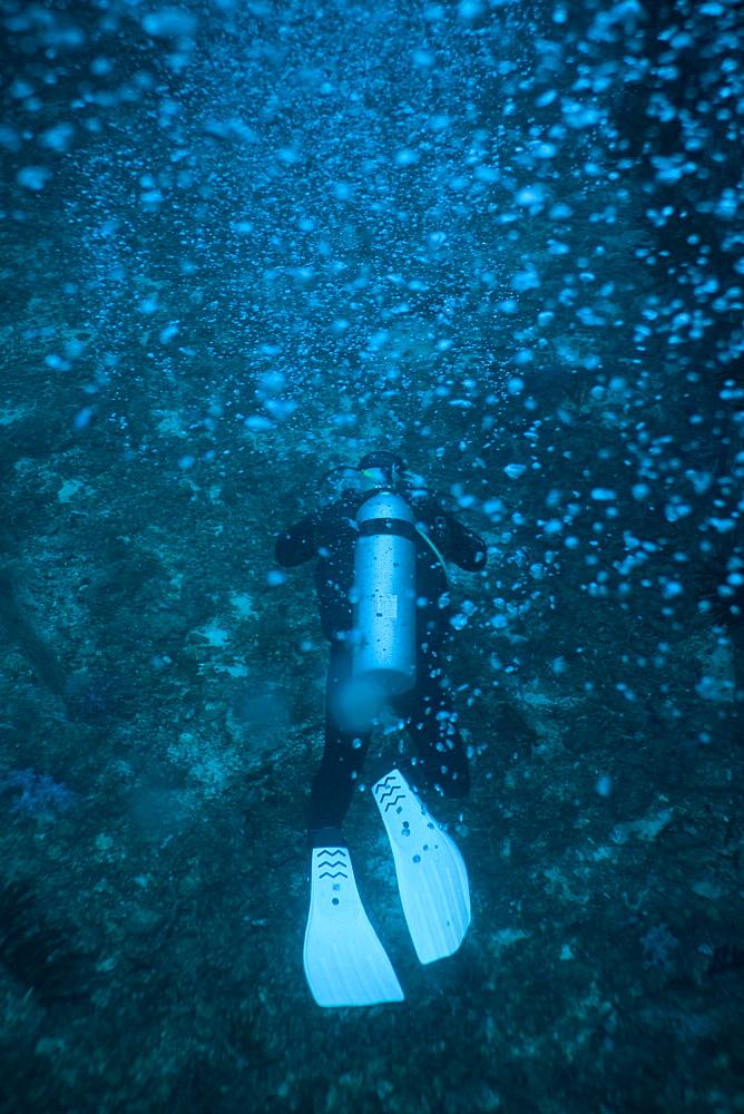 Scuba diver underwater, Thailand, Andaman Sea, Indian Ocean, Asia - 921-1296