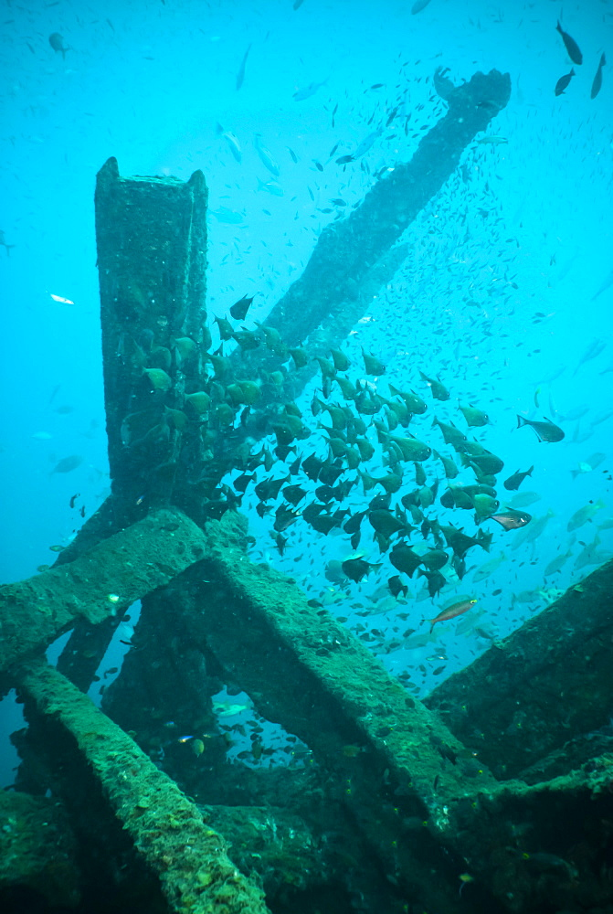 Wreck diving, Southern Thailand, Andaman Sea, Indian Ocean, Southeast Asia, Asia - 921-1329