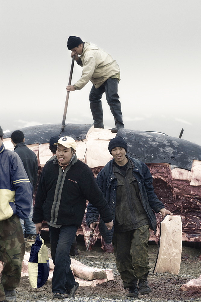 Inuit Settlement with locals and whale hunters, cutting large slabs of whale meat from a freshly caught Grey whale, Lorino Village (Chukotskiy Peninsular) Russia, Asia.