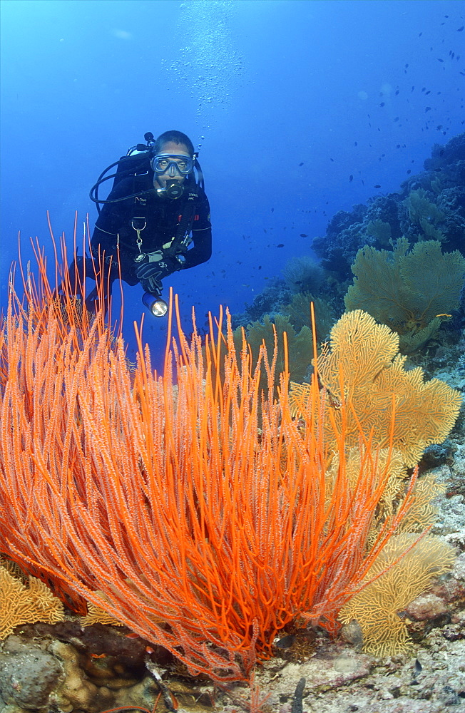 diver with whip coral