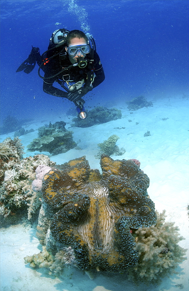 Diver with giant clam