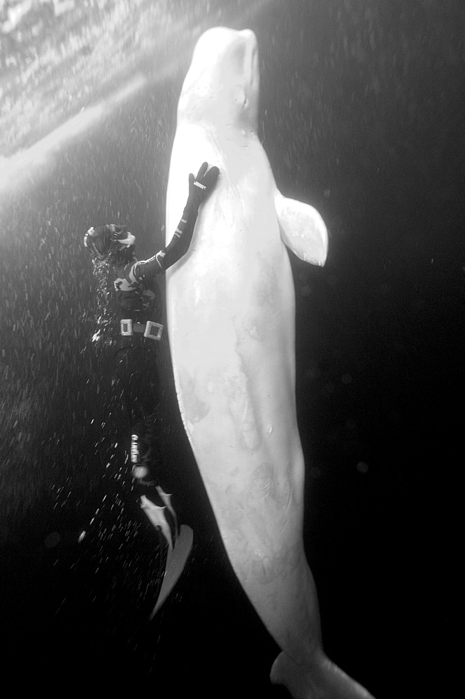 Julia Petrik  Russian freediver. White Sea, Russia