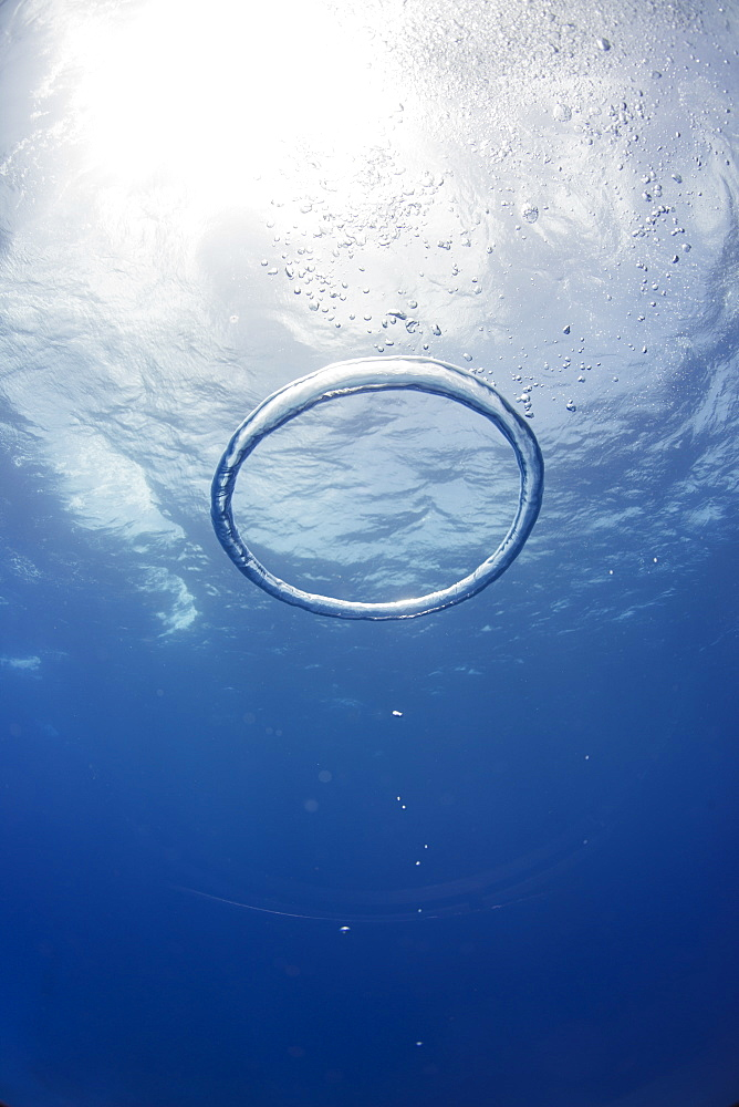 Bubble ring, Bahamas, West Indies, Central America - 934-701
