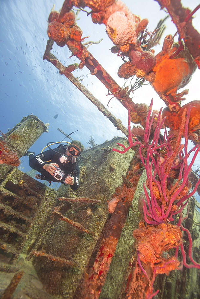 Wreck diving on the Hamel Wreck in Bahamas, West Indies, Central America