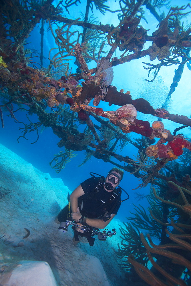 Wreck diving on the James Bond bomber wreck in Bahamas, West Indies, Central America - 934-712