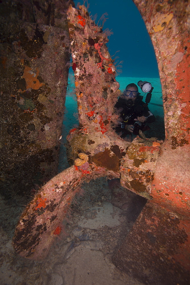 Wreck diving on the Hamel Wreck in Bahamas, West Indies, Central America - 934-716