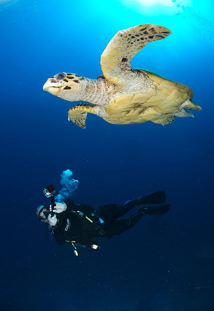 Camera being used by diver underwater in the Red Sea, Egypt, North Africa, Africa - 934-751