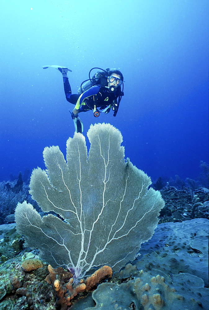 divers enjoying reef diving in Barbados, Caribbean