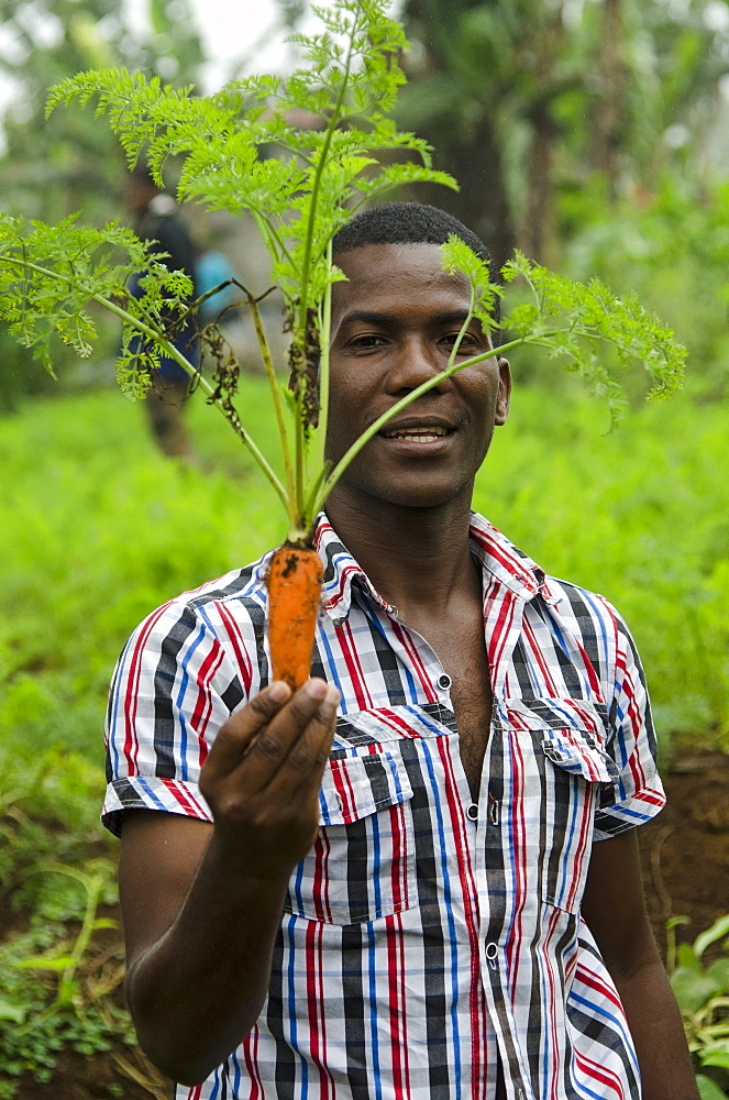 Carrots grown at high elevation close to the equator in Sao Tome, Sao Tome and Principe, Africa